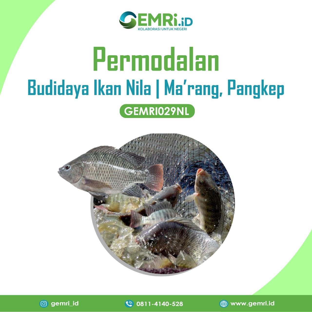 Investasi Budidaya Ikan Nila