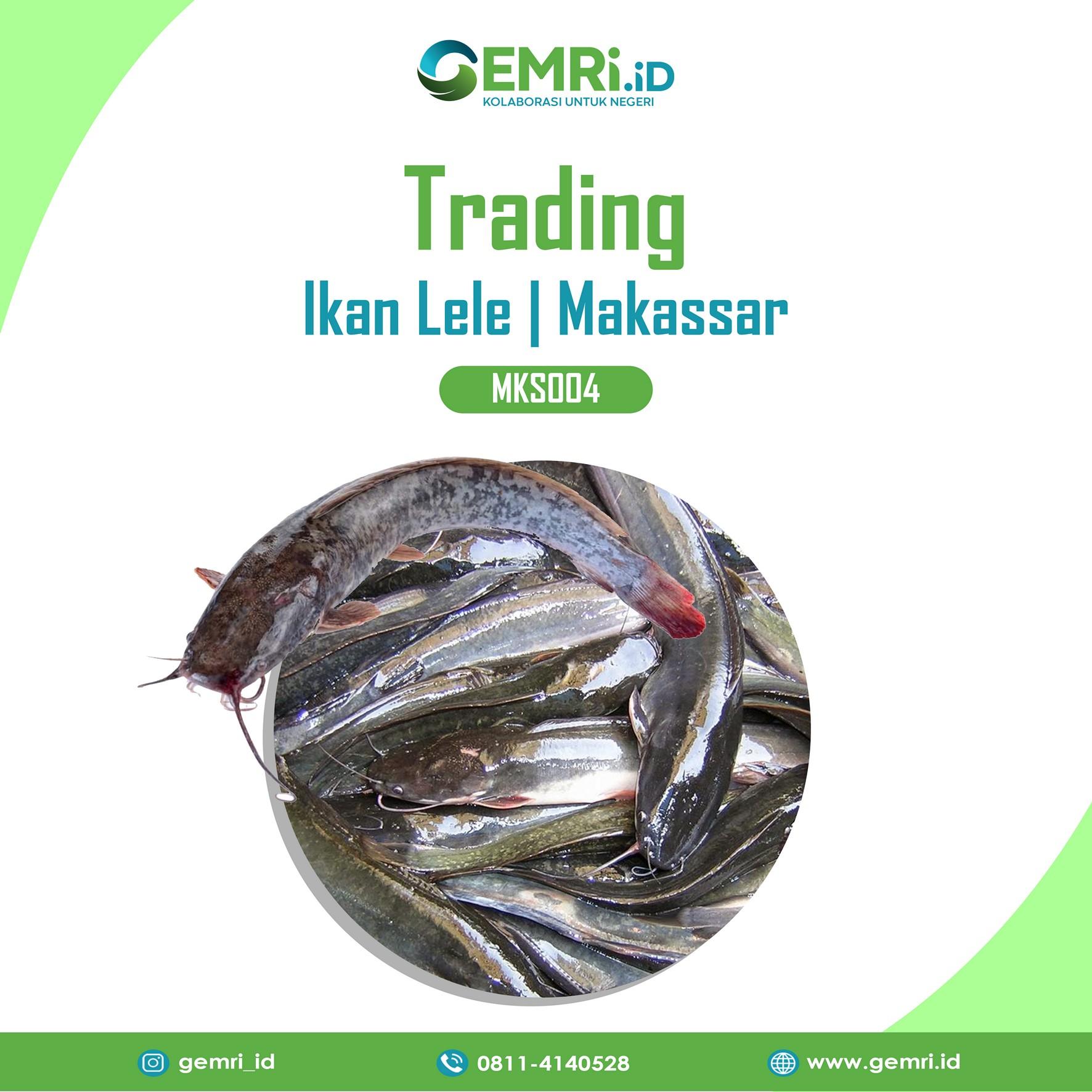 Trading Ikan Lele