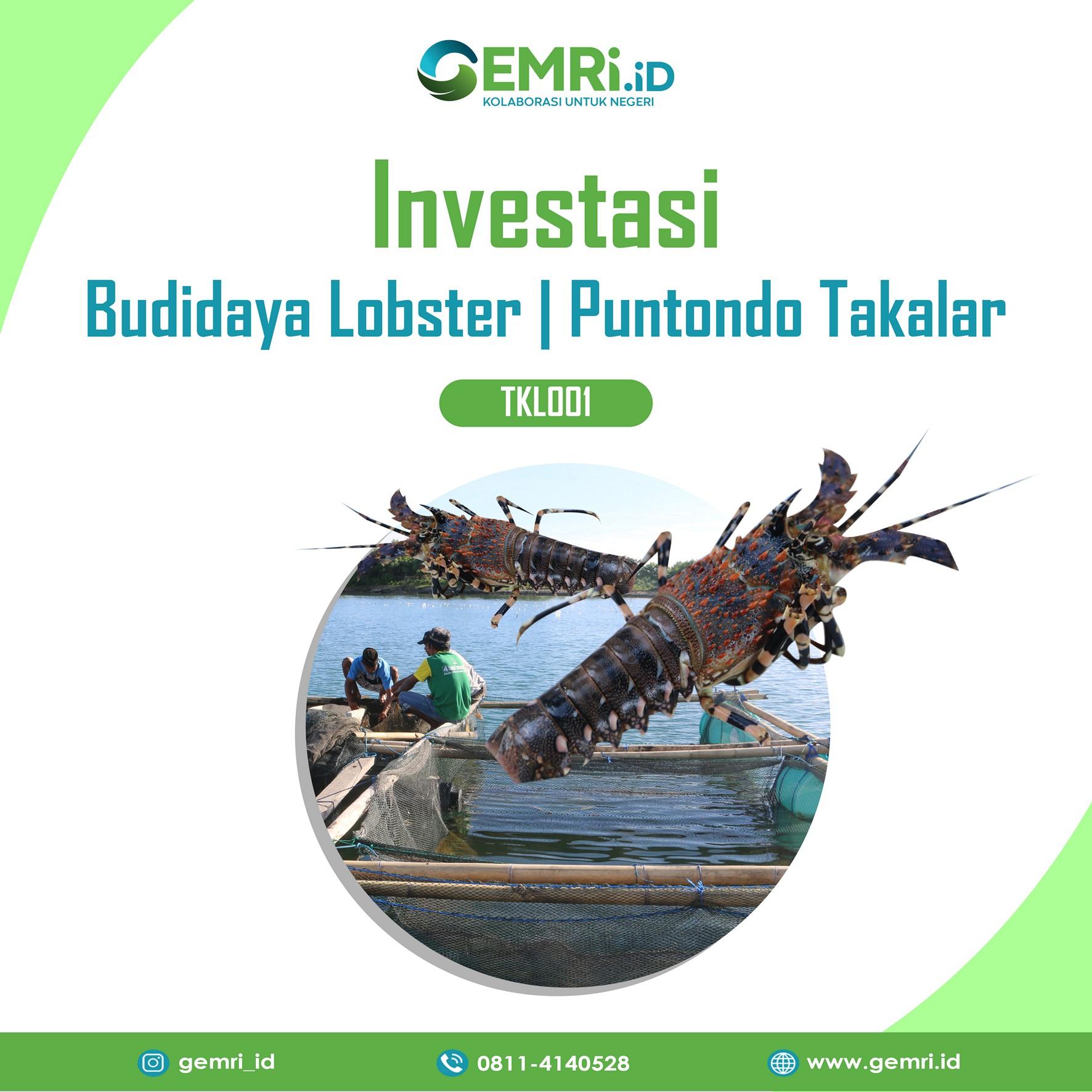 Permodalan Budidaya Lobster